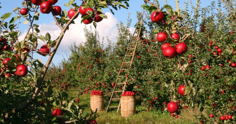 Clifton Park/Rexford Apple Orchard to Close After 50 Years