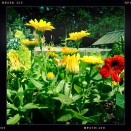 Plot 51 Summer flowers