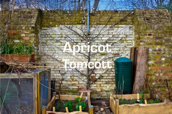 Plot 51 Apricot Tomcott