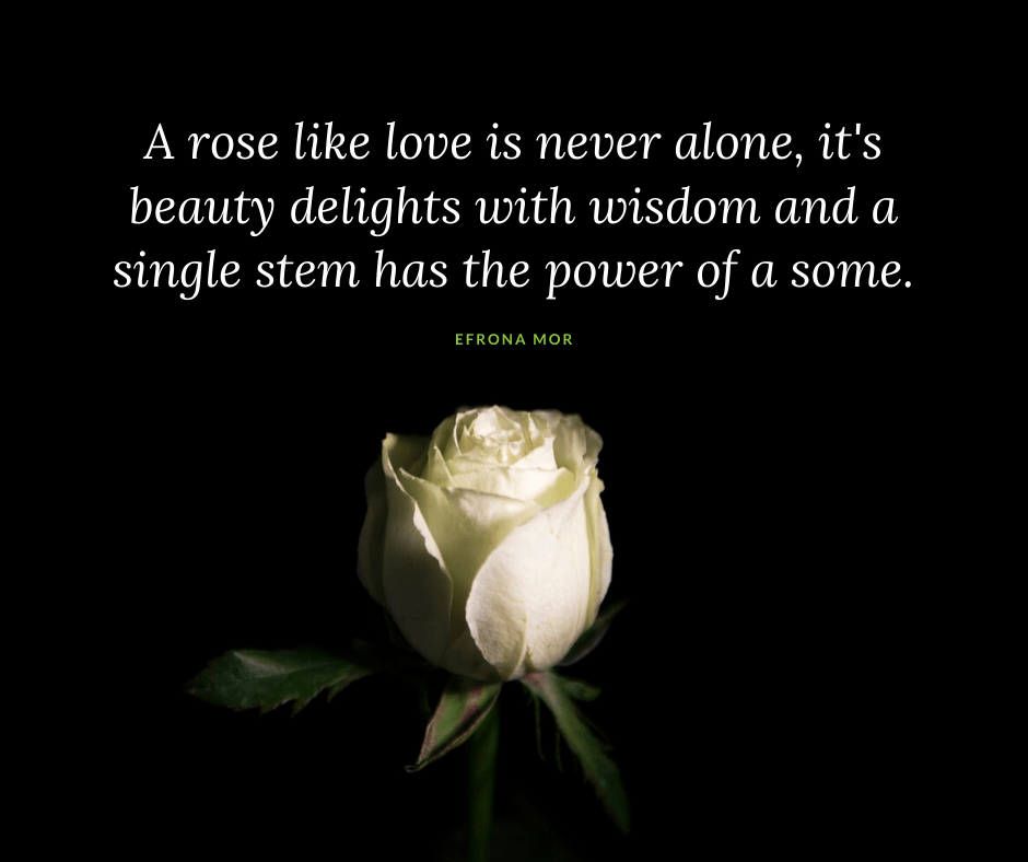 love quotes a white rose depicting love alone is powerful
