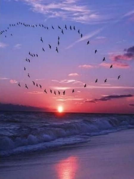 Birds flying in the sky make the shape of a heart with a beautiful sunset over the ocean