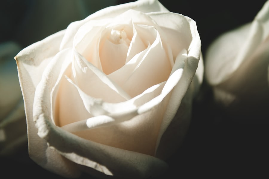 pure love as white as a rose