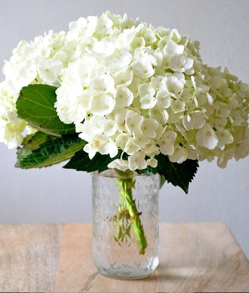 Hydrangea - popular wedding flower example