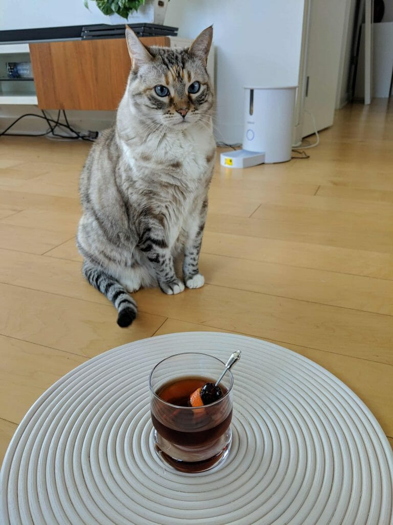 Cute cat with blue eyes next to cocktail on placemat