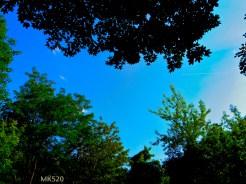 blue hole ... unten mittig ein Vogelbaum schreit nach seiner Mutter