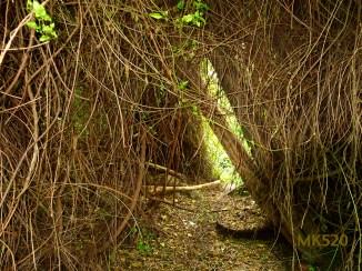 Tunnellicht am Ende