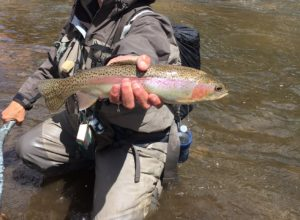 Tarryall Creek- Private Fly Fishing