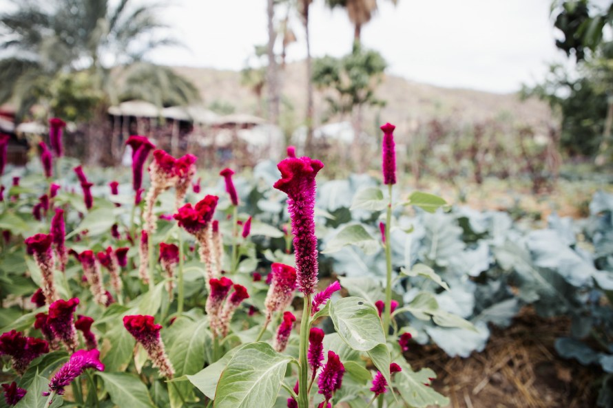 Flowers at Flora Farms Los Cabos