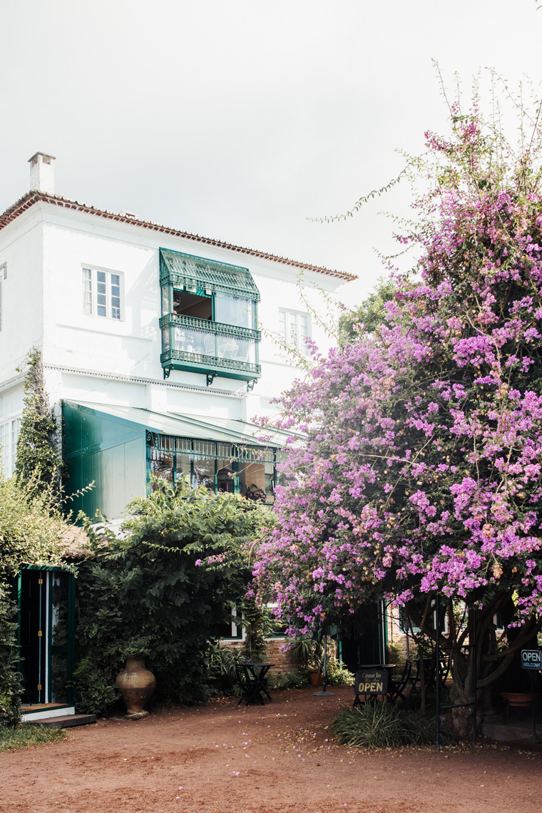 White building and tree with purple flowers