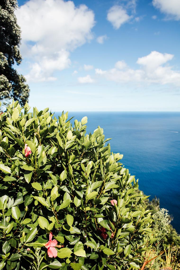 Flowers overlooking the ocean