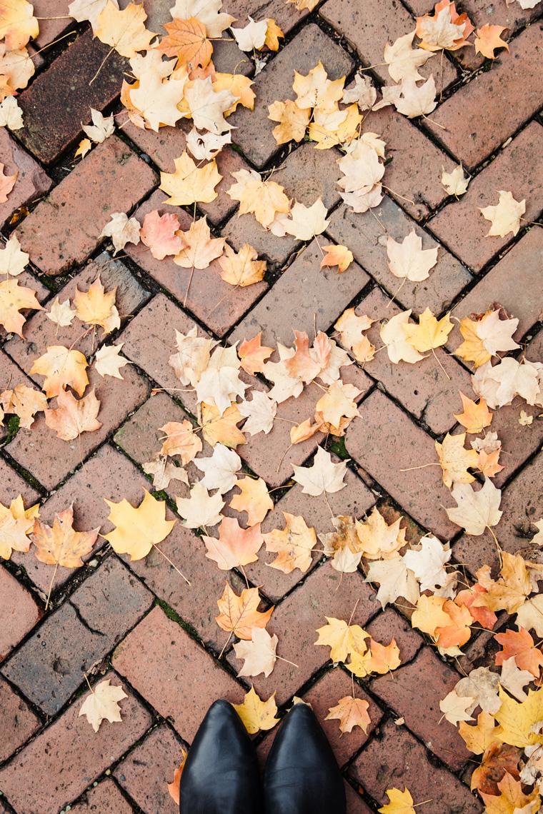 German Village leaves on sidewalk