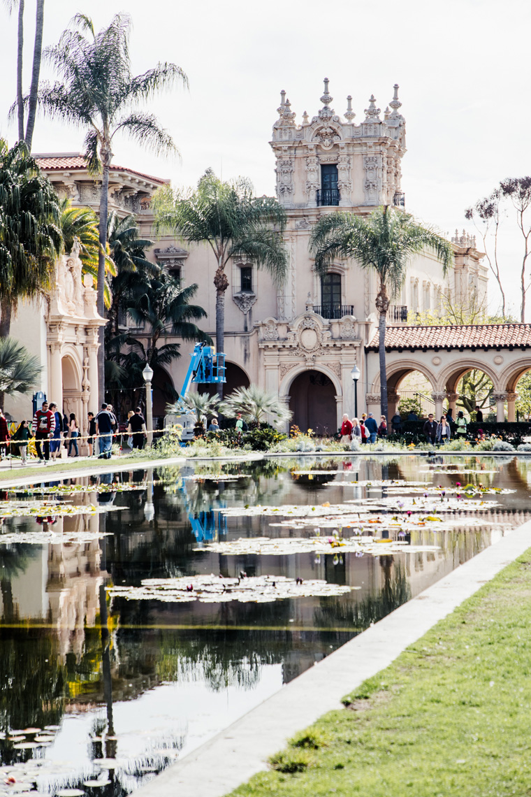Water lilies in Balboa Park