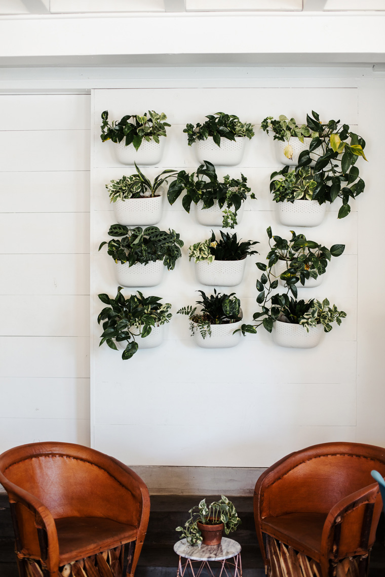 Two chairs in front of wall of plants