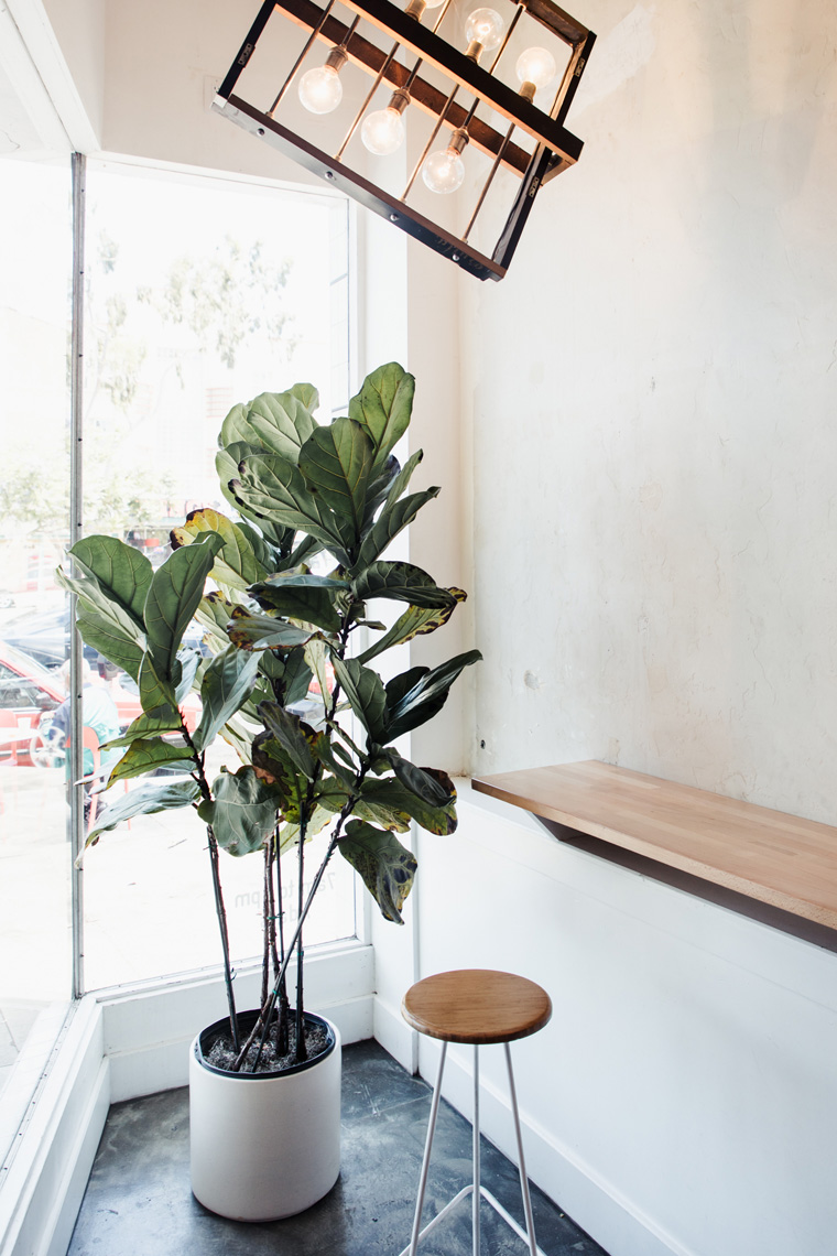 Potted plant by a window