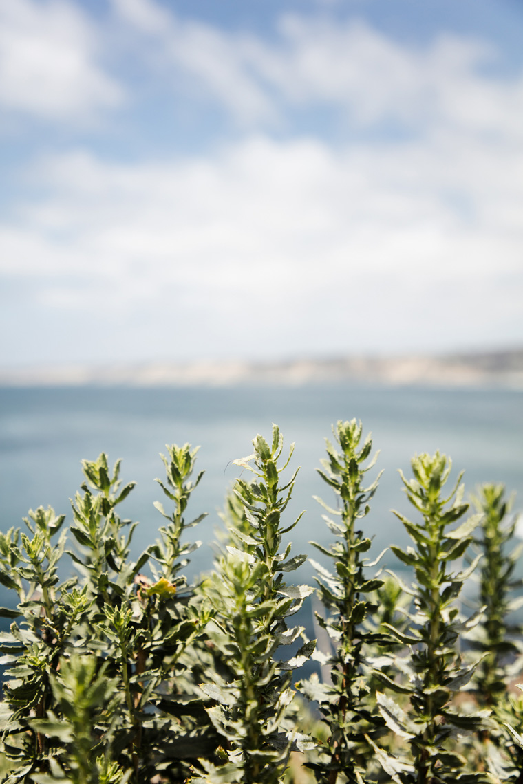 Green plants in front of the ocean
