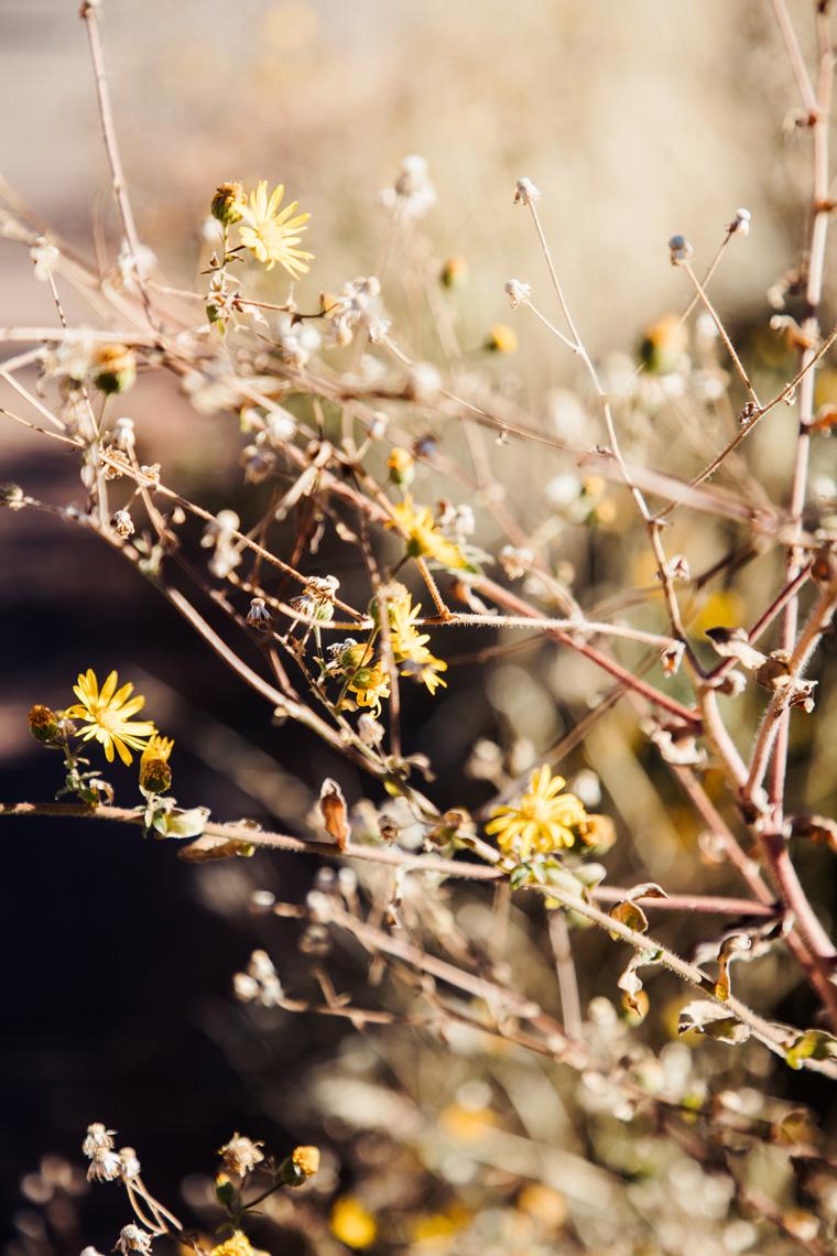 Flowers on Sedona trail