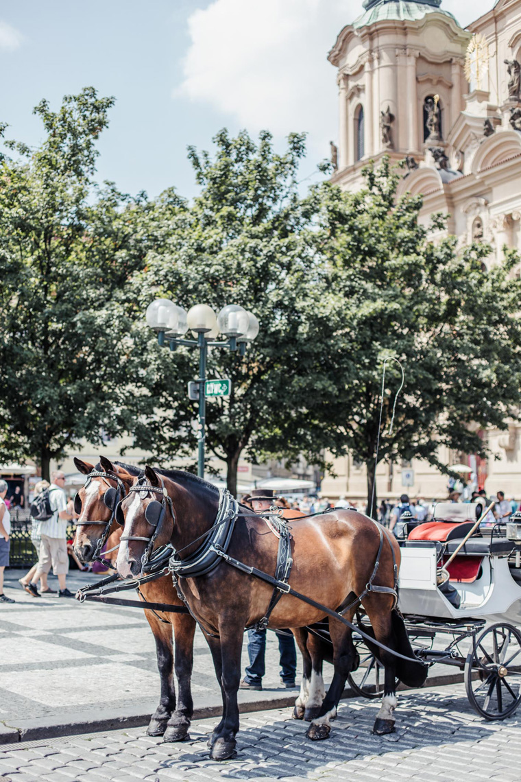 horses - Prague two day itinerary