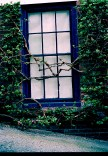Window and Vines