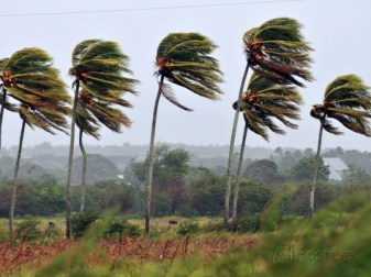 alejandro-ernesto-palm-trees-are-moved-by-the-wind-in-pinar-del-rio