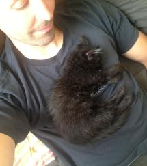 Stufftoblowyourmind Catsbeaversandducks Adopted Cat