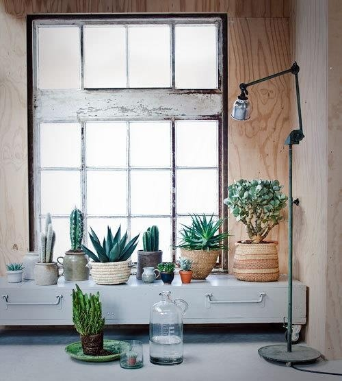 Potted plants in window sill