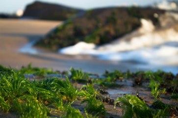 Sea weed?