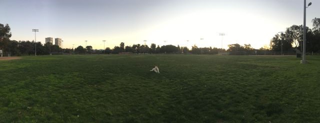 5am dogpark activities