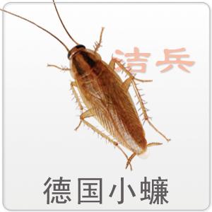 徹底消滅蟑螂的七種方法