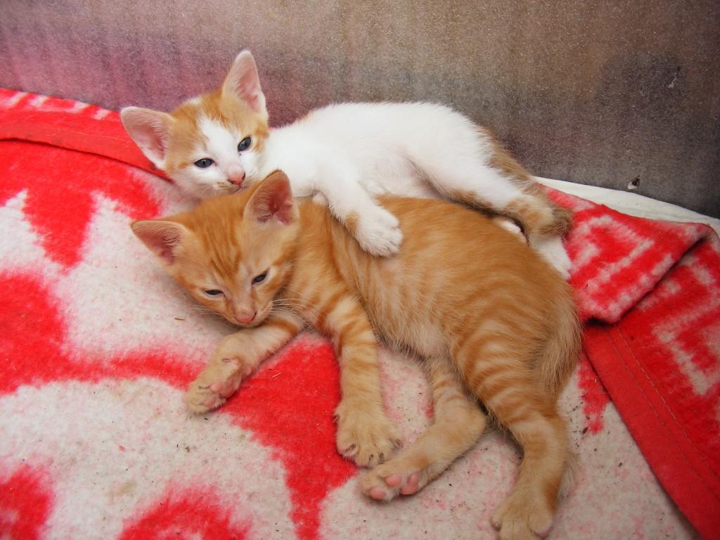 Cute-Kitten_151493-1024x768