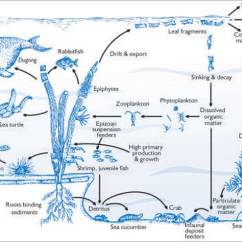 Coral Reef Food Chain Diagram Aftermarket Stereo Wiring Philippines Ecosystem En Endangered These Are Destructive Fishing Practices Which Use Explosives And Chemicals To Break Realease Fish