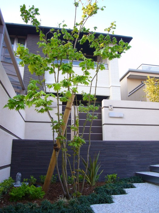 玄関前の樹木と外構