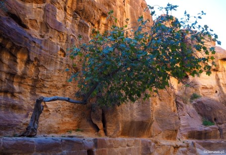 Petra - wąwóz al-Siq - Jordania - Piąty Kierunek03
