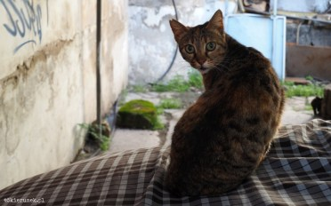 Cypryjskie koty - Piąty Kierunek03