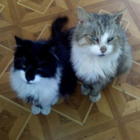 naminiai gyvūnai - katės