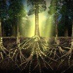 Ciencia: Las plantas se comunican mediante una Internet de hongos