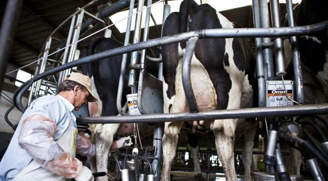 Leche: aumenta la preocupación del sector productor