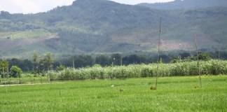 Pegunungan-karst-Kendeng-sebagai-sumber-air-bagi-pengairan-irigasi-sawah-warga-di-Kayen-Tambakromo-dan-Sukolilo-Pati.