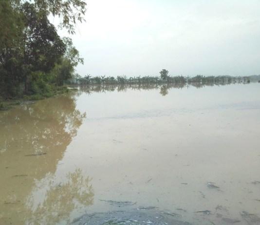 Nasib Petani saat Pandemi: Tanam Padi Pupuk Mahal, Kini Kebanjiran