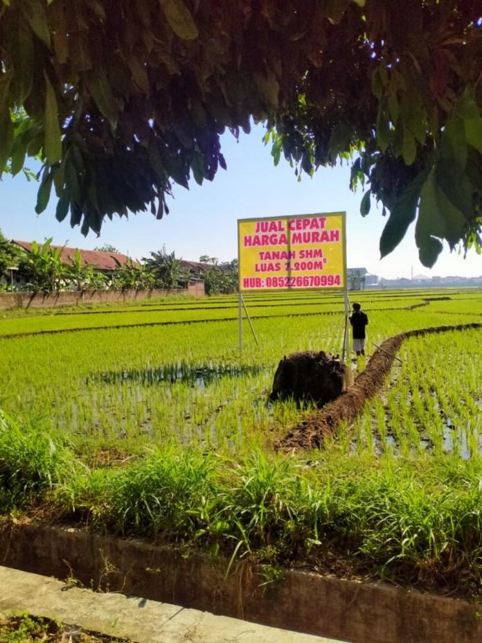 TANAH MURAH DIJUAL CEPAT Lokasi di sebelah selatan SDN Margorejo 01 Pati (pinggir jalan)