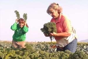 local-sourcing-veggies