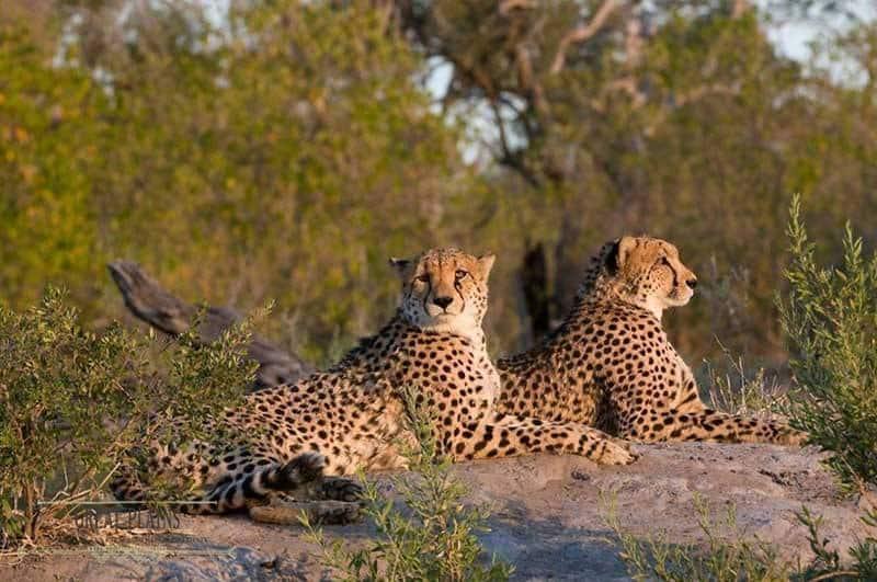 Luxury Honeymoon Africa