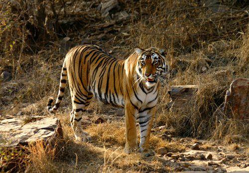 Honeymoon To Promote Awareness Of Endangered Species