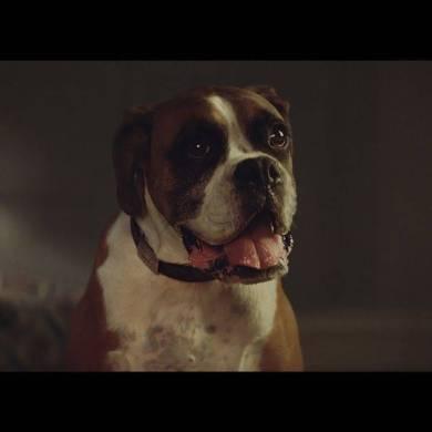 John Lewis Christmas Advert 2016 – #BusterTheBoxer