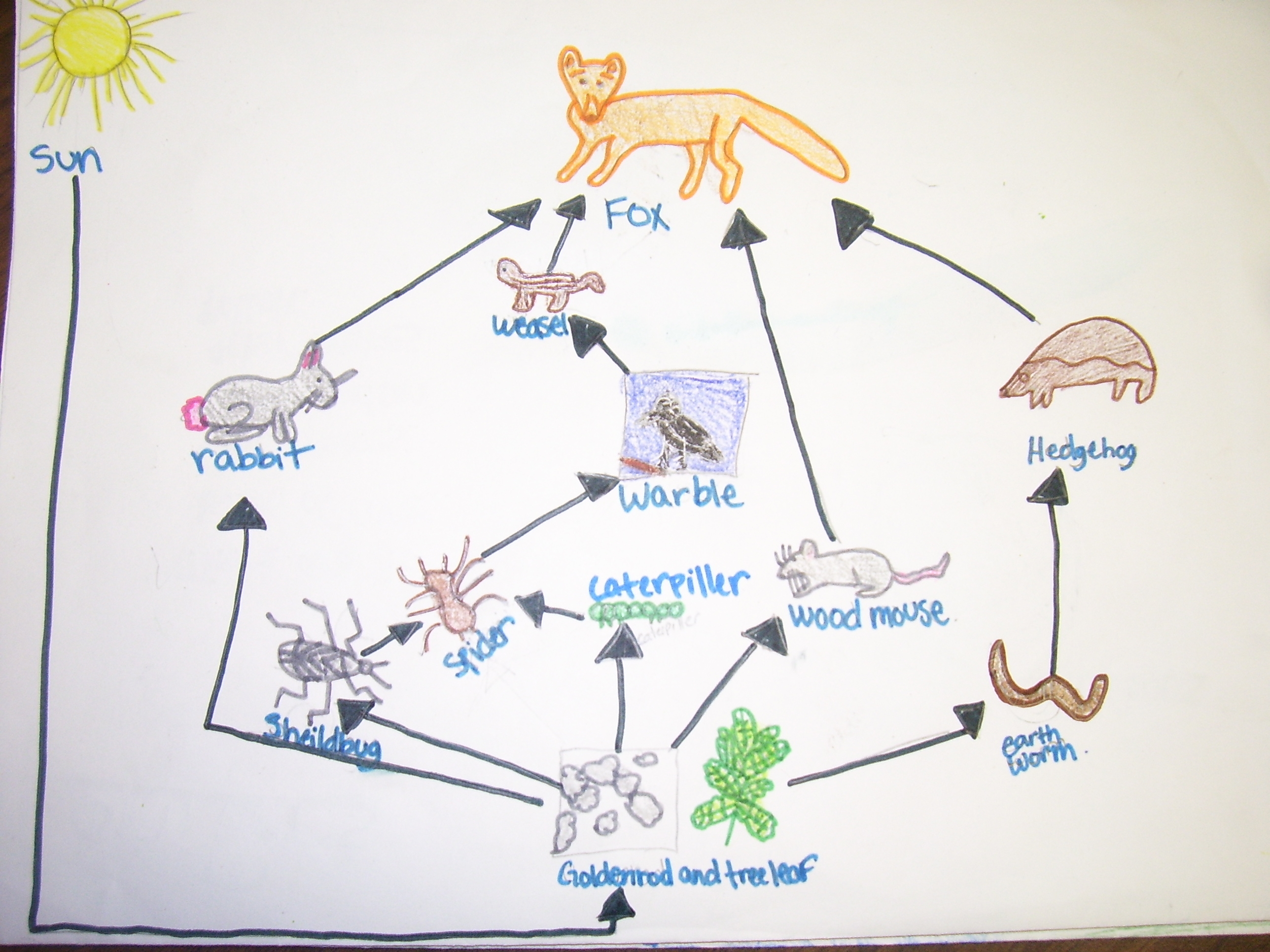 Forest Biome Food Chain In Deciduous Forest Biome