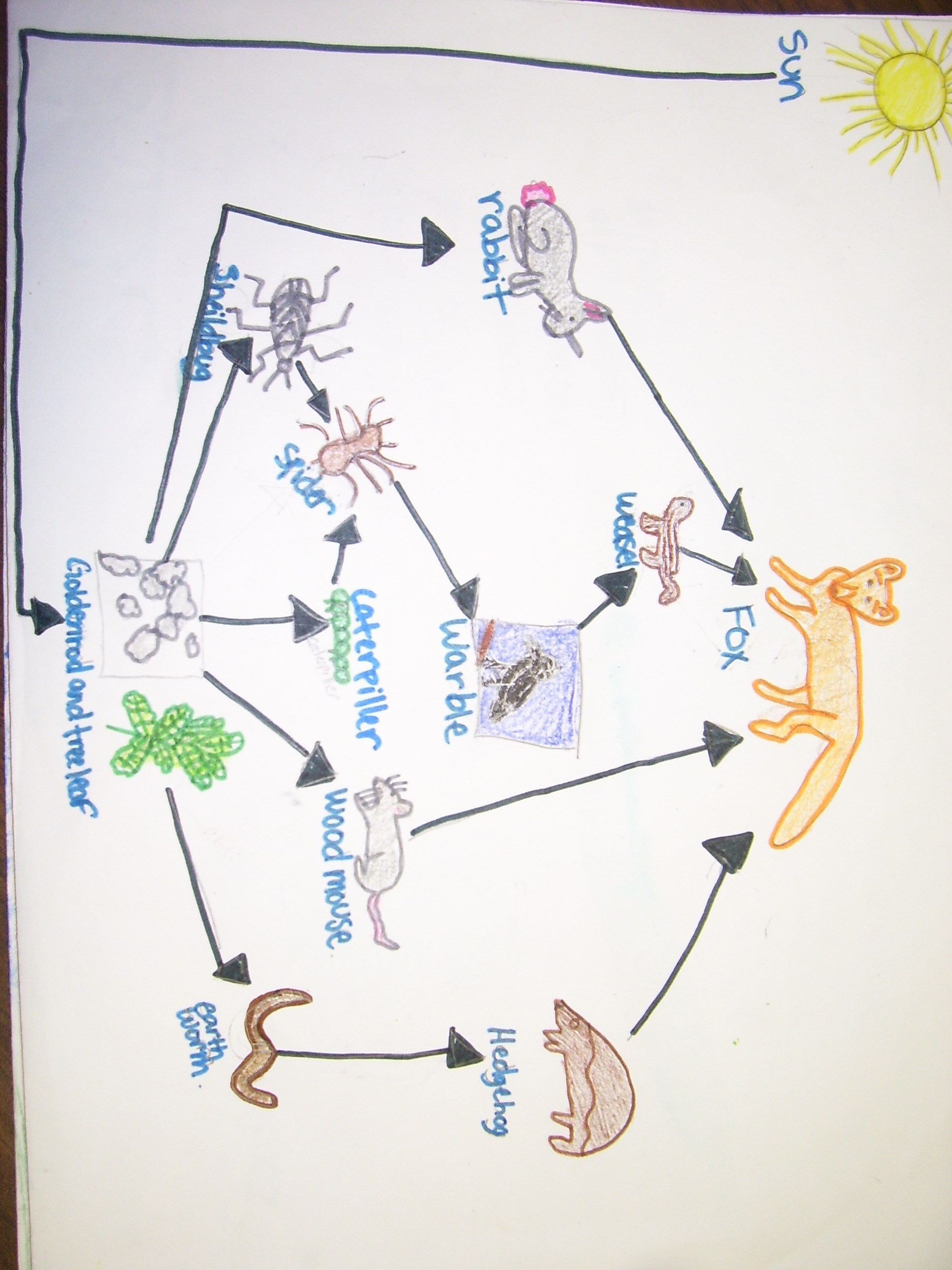 deciduous forest food chain diagram ceiling fan dimmer switch wiring temperate