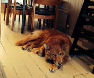 Mungo's Dog
