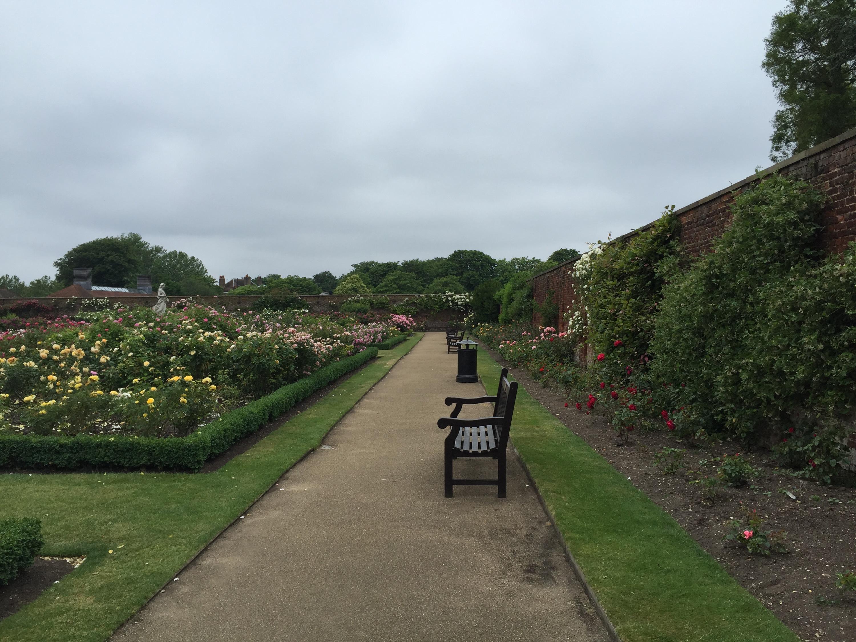 Roses In Garden: Visit The Rose Garden At Hampton Court Palace