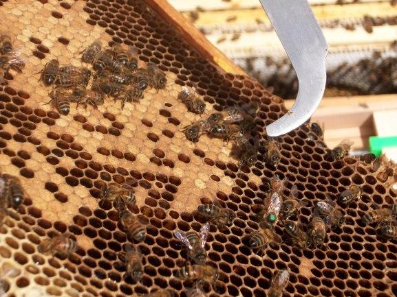Bee hives at Lancaster London 3
