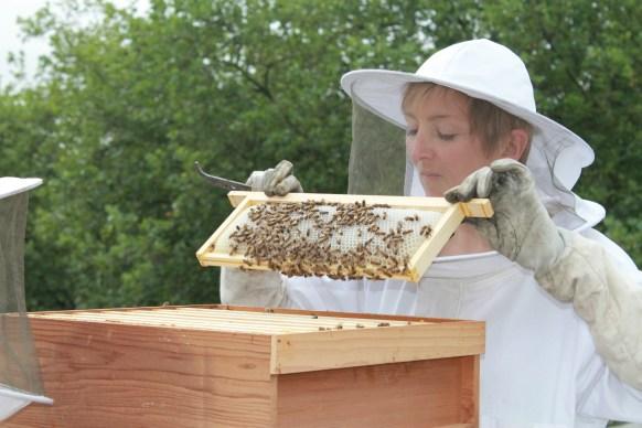 Jo Hemesley - Beekeeper