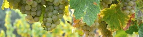Weinregion 5vier